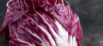 Продам салат Радичио оптом с плантаций Турции