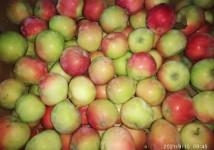 Яблоки Женева Эрли оптом