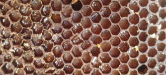 Пчелиная перга, пыльца, Приморский край