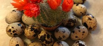 Инкубационные яйца перепелов - Феникс, Краснодар, Краснодарский край