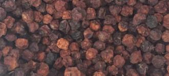 Рябина красная и черная черноплодная