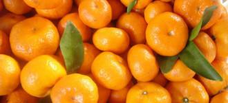 Продам Мандарины (Грузия) урожай 2020 года