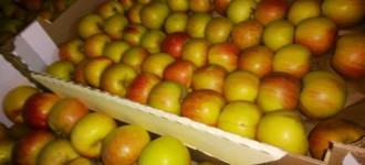 Яблоки Фуджи, сорт 1, калибр 65-70 в картонном лотке 60х40, вес 13-15кг мытые полированные