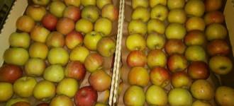 Яблоки Фуджи, сорт 1, калибр 70-75 в картонном лотке 60х40, вес 13-15кг мытые полированные