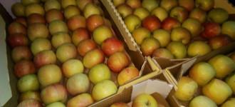 Яблоки Фуджи, сорт 2, калибр 65-70 в картонном лотке 60х40, вес 13-15кг мытые полированные